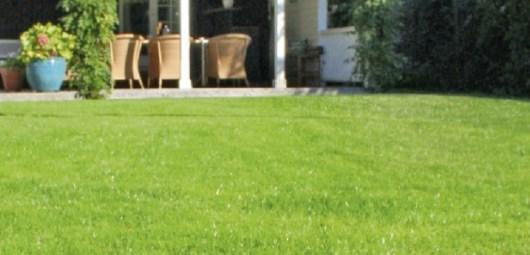 Algomin för din gräsmatta