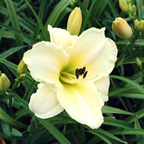 Bild från Gullans trädgård